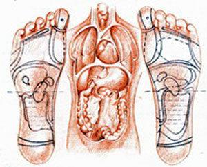 Unitarnji organi i stopalo