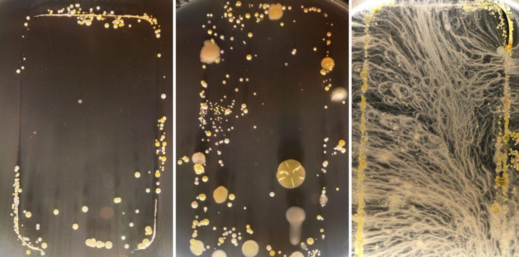 Bakterije pronađene na mobilnim telefonima (Slika: University of Surrey)